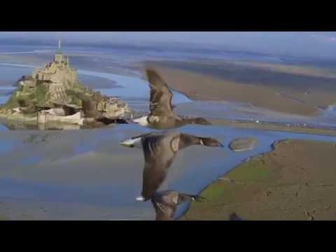 Joy Wellboy   Before the Sunrise Dixon Remix HD