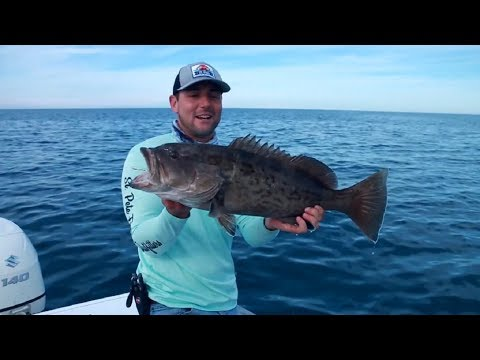 BIG Gag Grouper And Cobia Fishing - Offshore Port Richey Florida