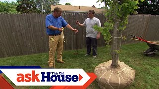 How to Plant a Large-Shade Tree | Ask This Old House
