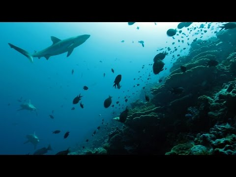 Our Deepest Waters: Exploring Marine National Monuments in the remote reaches of the Pacific