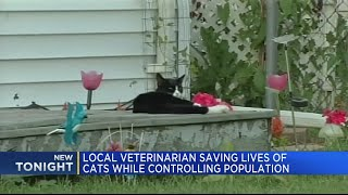 Local veterinarian saving lives of cats while controlling population