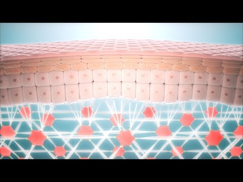 Skin Anti Aging - Fibroblast and Collagen Network Regeneration CGI animation