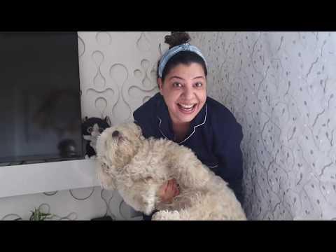Three Dogs Bath Challenge | 21 days Lockdown | Ss vlogs :-)