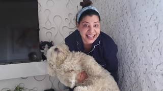 Three Dogs Bath Challenge | 21 days Lockdown | Ss vlogs :-)