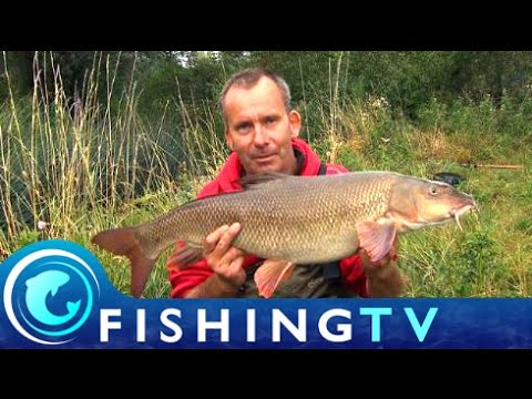 How To Fish For Small River Barbel - Fishing TV