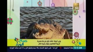 البيئة: إنشاء أول مزرعة مصرية لتربية التماسيح بجوار بحيرة ناصر