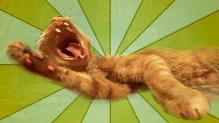 Рыжий кот потягивается и зевает. Ginger cat stretches and yawns