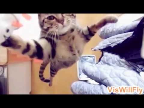 Котики наркотики | Кошка | Cats compilation 2013