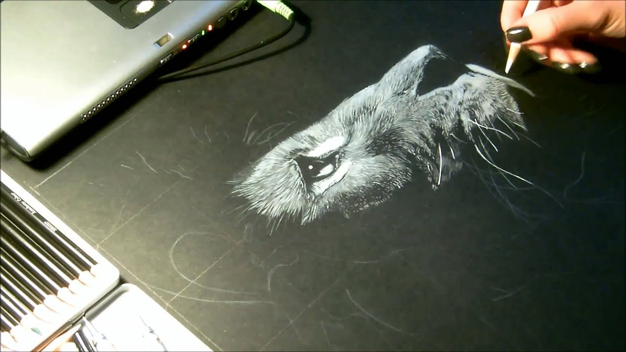 speed drawing dessin lion crayon blanc sur fond noir. Black Bedroom Furniture Sets. Home Design Ideas