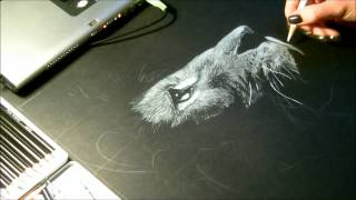 "Speed drawing, dessin  ""Lion"" Crayon blanc sur fond noir"