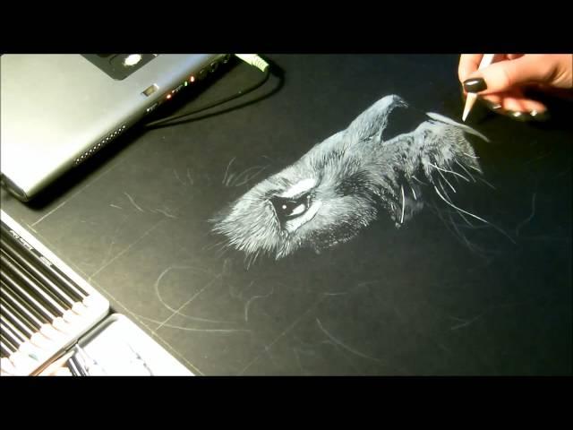 Speed drawing, dessin  Lion Crayon blanc sur fond noir