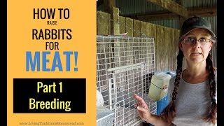 How to Raise Rabbits for Meat:  Part 1 Breeding