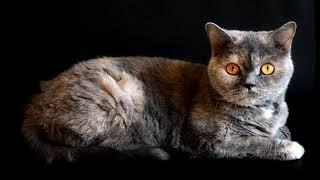 хромакей Cat   котик на чёрном фоне