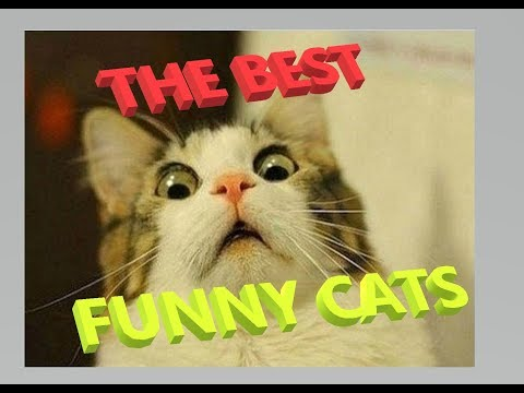 Ultimate funny cats compilation THE BEST