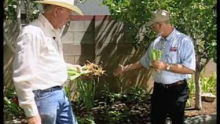 How To Divide And Re-Plant Irises