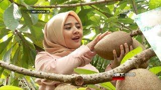Kebun Buah Langka Terlengkap di Indonesia - NET YOGYA