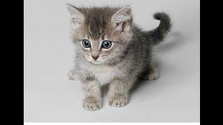 Домашние животные и их детеныши. Развивающий мультик про животных для детей от года