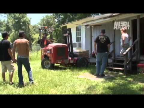Marines to the (Dog) Rescue! | Pit Bulls and Parolees