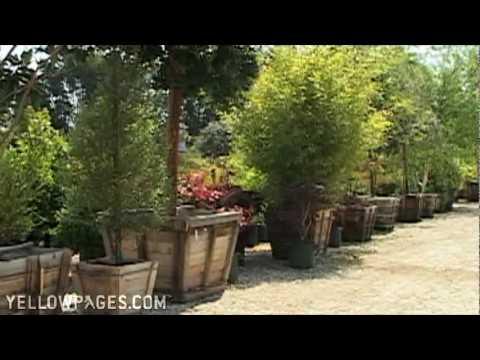 Camarillo Ca Gardening Supplies Baron Brothers Nursery