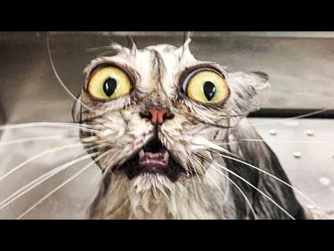 Funniest  Cats and  Dogs - Awesome Funny Pet Animals' Life Video