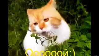 """Кот говорит """"Ой чуваки"""" Говорящие коты  Приколы с котами Смешные животные"""