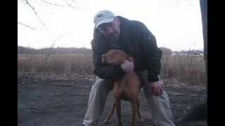 GroundHog Day: Decision 2013 - Can Butch the Vizsla Predict Weather As Well As A GroundHog?