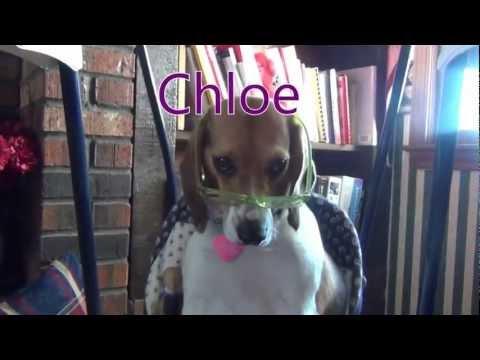 Natalies Hound Dog Show