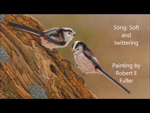 How to recognise birds from their song