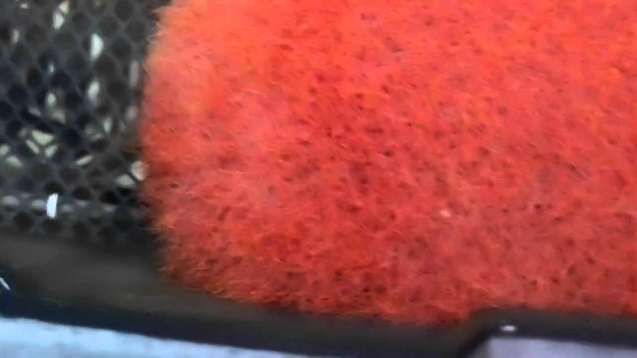 絲蚯蚓 | Doovi