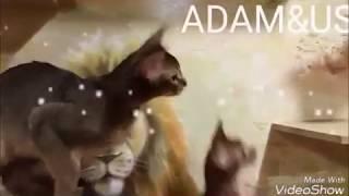 Классные абиссинские котята