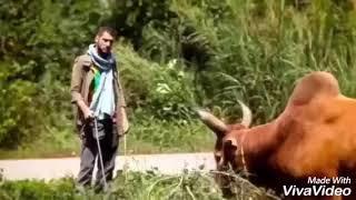 มหาลัยวัวชน เวอร์ชั่นอังกฤษ คาราโอเกะ