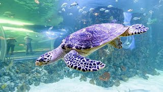 Океанариум#4: Большая морская черепаха.