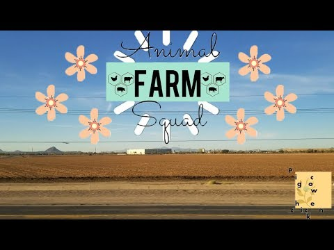AFS Pitch Video: Animal Cruelty in Factory Farms