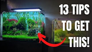 13 TIPS For EstabĮishing A New Planted Tank