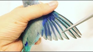 How to Clip a Parrot's Wings:  Easy Steps!