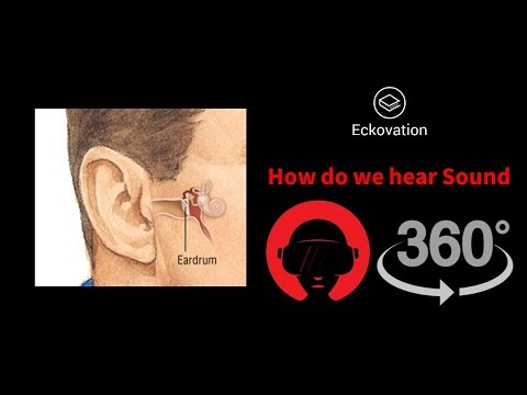 How do we hear Sound | VR 360 | Virtual Reality | Human Boady