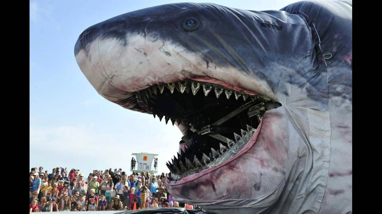 World's Biggest Shark EVER! Megalodon - YouTube