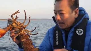 MC VIET THAO- CATCHING and PROTECTING LOBSTER in CANADA.