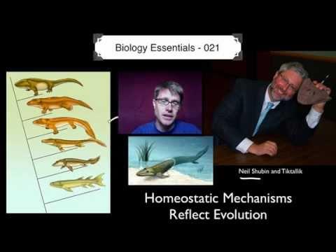 Homeostatic Evolution