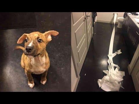『おしっこ漏らしちゃった、どうしよう...』 賢い子犬がとった行動とは...