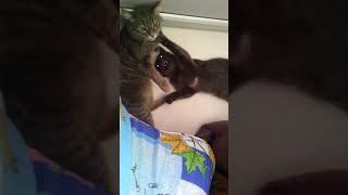 Маруся и котенок дерутся
