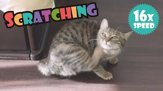 A Cat Scratching At 16x Speed  猫が16倍速で掻くと(驚)