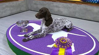 Meet Westminster Kennel Club's 'Best in Show', C.J.