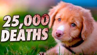 10 Deadliest Animals on Earth