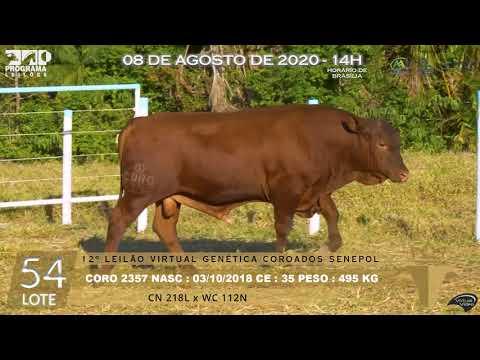 LOTE 54 CORO 2357