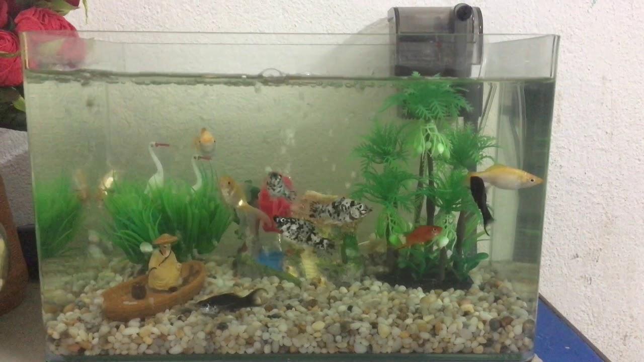 Bể cá thuỷ sinh cây nhựa trang trí 35*20*22