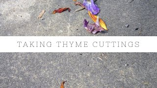 How to propagate Thyme cuttings
