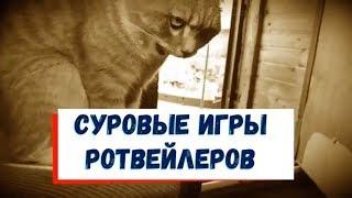 СУРОВЫЕ ИГРЫ РОТВЕЙЛЕРОВ.Воспитание и дрессировка собак
