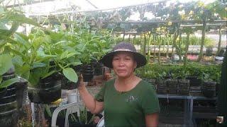 Vườn Rau xanh ngát đủ các loại rau trên sân thượng  | Khoa Hiên 305