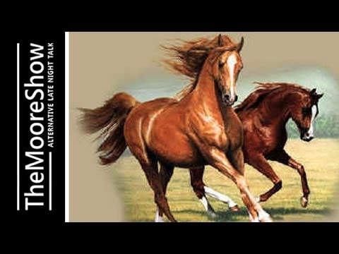 Speaking to Horses: The Wisdom of Wise and Sentient Beings